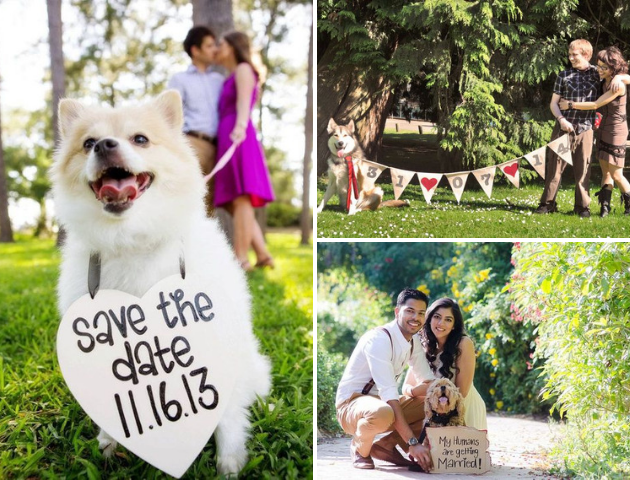 Save The Date Photoshoot With Your Pets, Include your pets in your wedding,