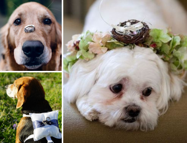 Make your pets ring bearers