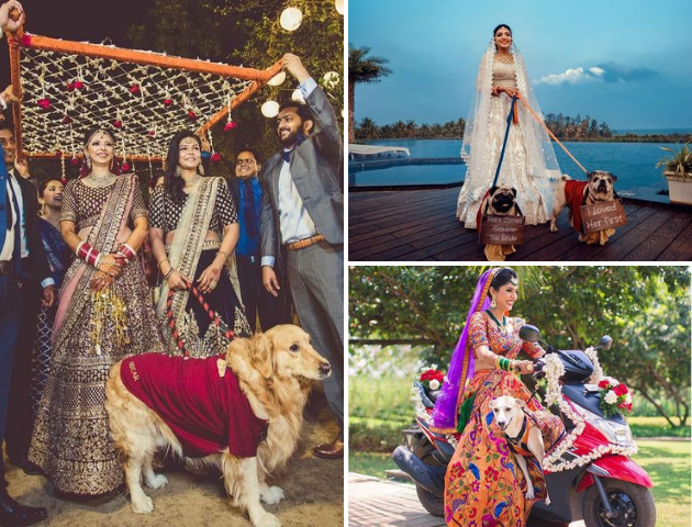 Bridal Entry with your pets, Baarat entry with pets